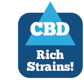 CBD Rich Strains