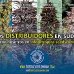 Temporada Primavera – Otoño en Tropical Seeds Company Promoción 17-31 Octubre
